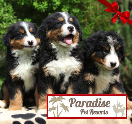 Paradise Pet Resorts